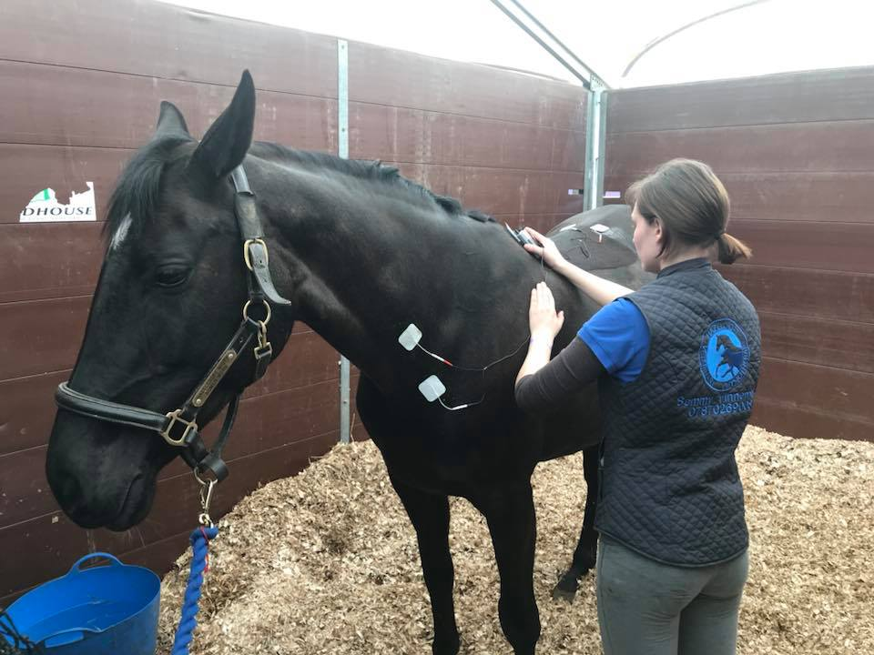 Horse Electrotherapy