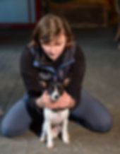 hazelcroft-veterinary-physiotherapy-13De