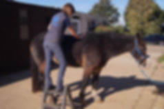 Equine Physiotherapy - Massage