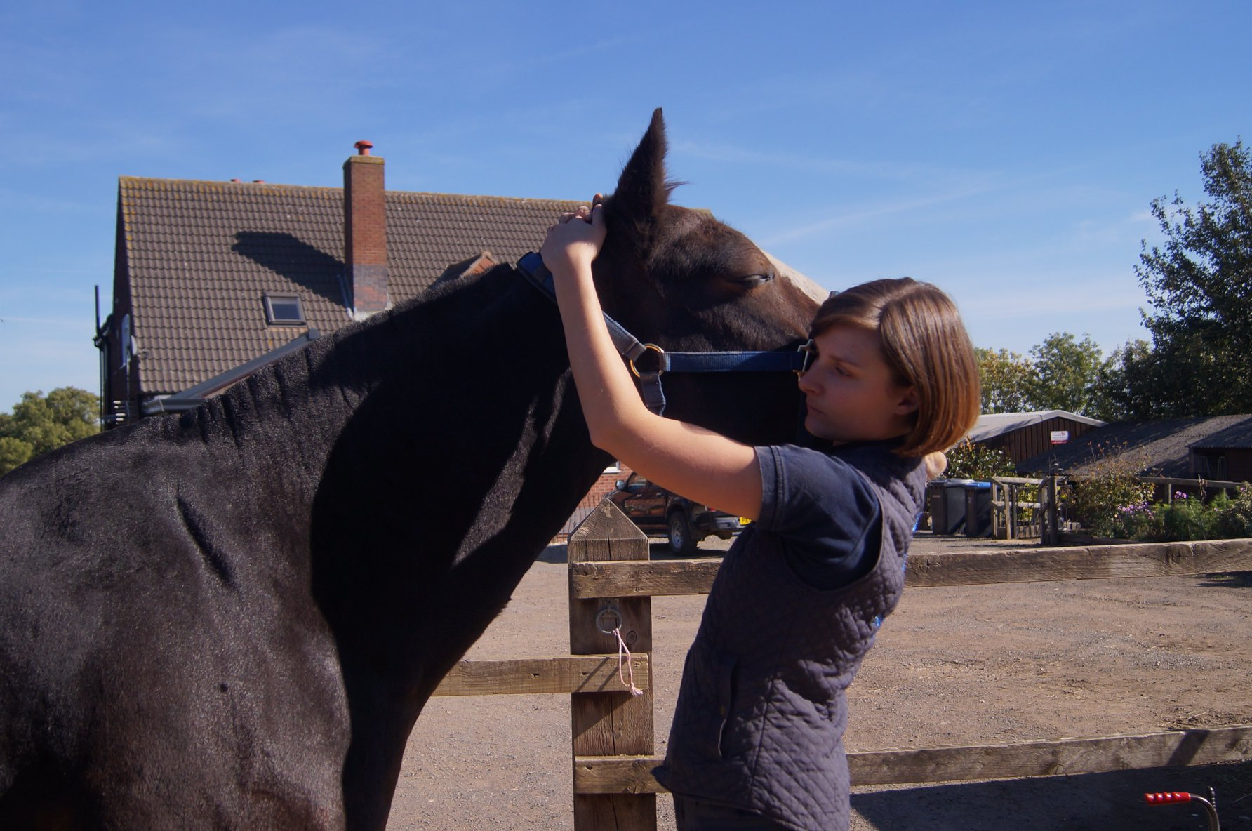 Horse Physiotherapy - Leicestershire