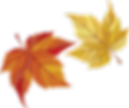 maple-leaves-482678_960_720.png