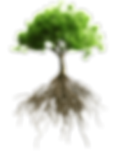 kisspng-root-tree-stock-photography-root