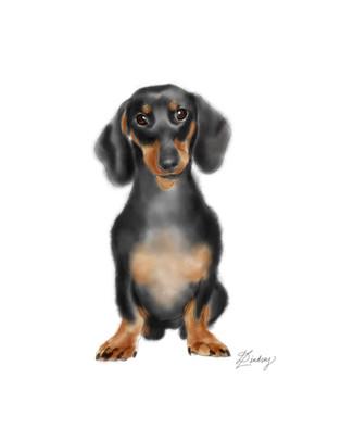 watercolor & ink style pet portrait