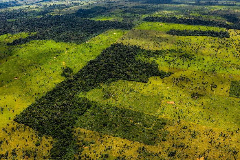 Rainforest Destruction.jpg