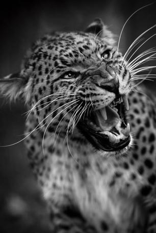 Get Lost Leopard web.jpg