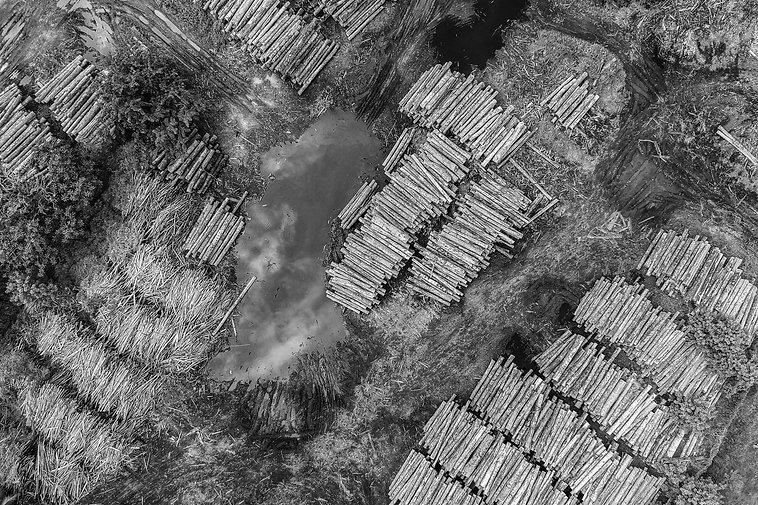 Deforestation BW Web.jpg