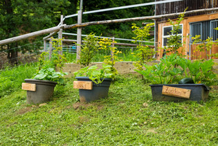 Schwingerhof Gemüse