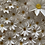 Thumbnail: Britannia dies - Complete flower making kit