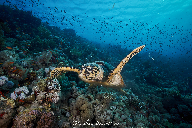 Jackson Reef Dive 2 - 6 290819