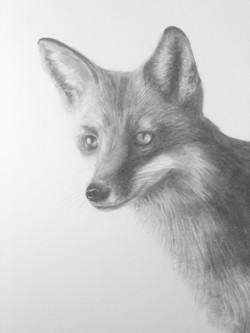 Fox detail life size