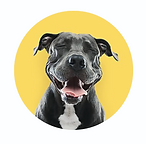 Adopt a pet Sydney dogs for adoption rescue dog rescue puppies adopt a dog