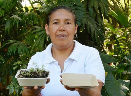 Platos biodegradables hechos de maíz y piña germinan al desecharlos.