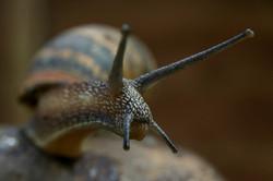 Snail, Glenn Johnson.jpg
