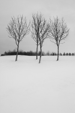 snowtree14bw.jpg