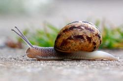 Snail, Pete Ricketts.jpg