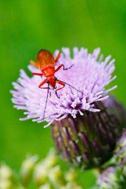 red insect1, Jon Bird.jpg