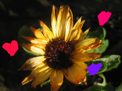 Rubys creation of Sunflower with extras!!!.jpg