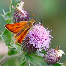 Butterfly or moth Pete Ricketts.jpg