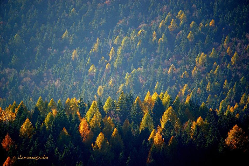 Foto 1 - autunno in alta Val d'Assa (2).