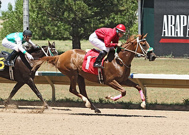 Arabian Racing Photo 2  JUNIA-acrossthe-