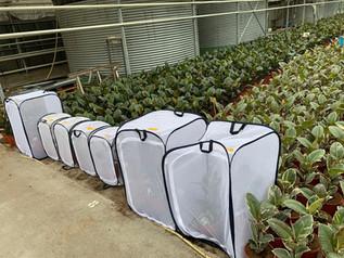 Potplanten update