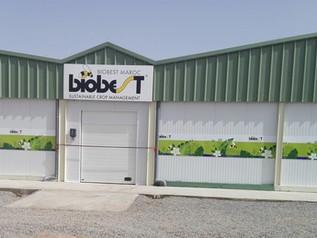 Nieuwe productiefaciliteit voor biologische bestrijders bladluis in Marokko