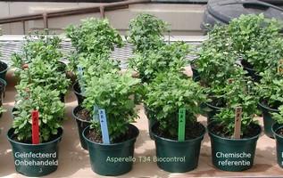"""""""Biologische fungicide zorgt voor gezonder wortelmilieu"""""""