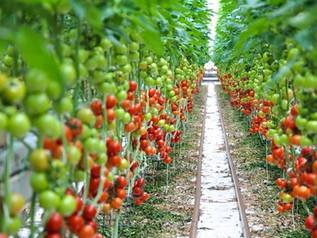 Toegelaten nieuwe middelen voor groenteteelt