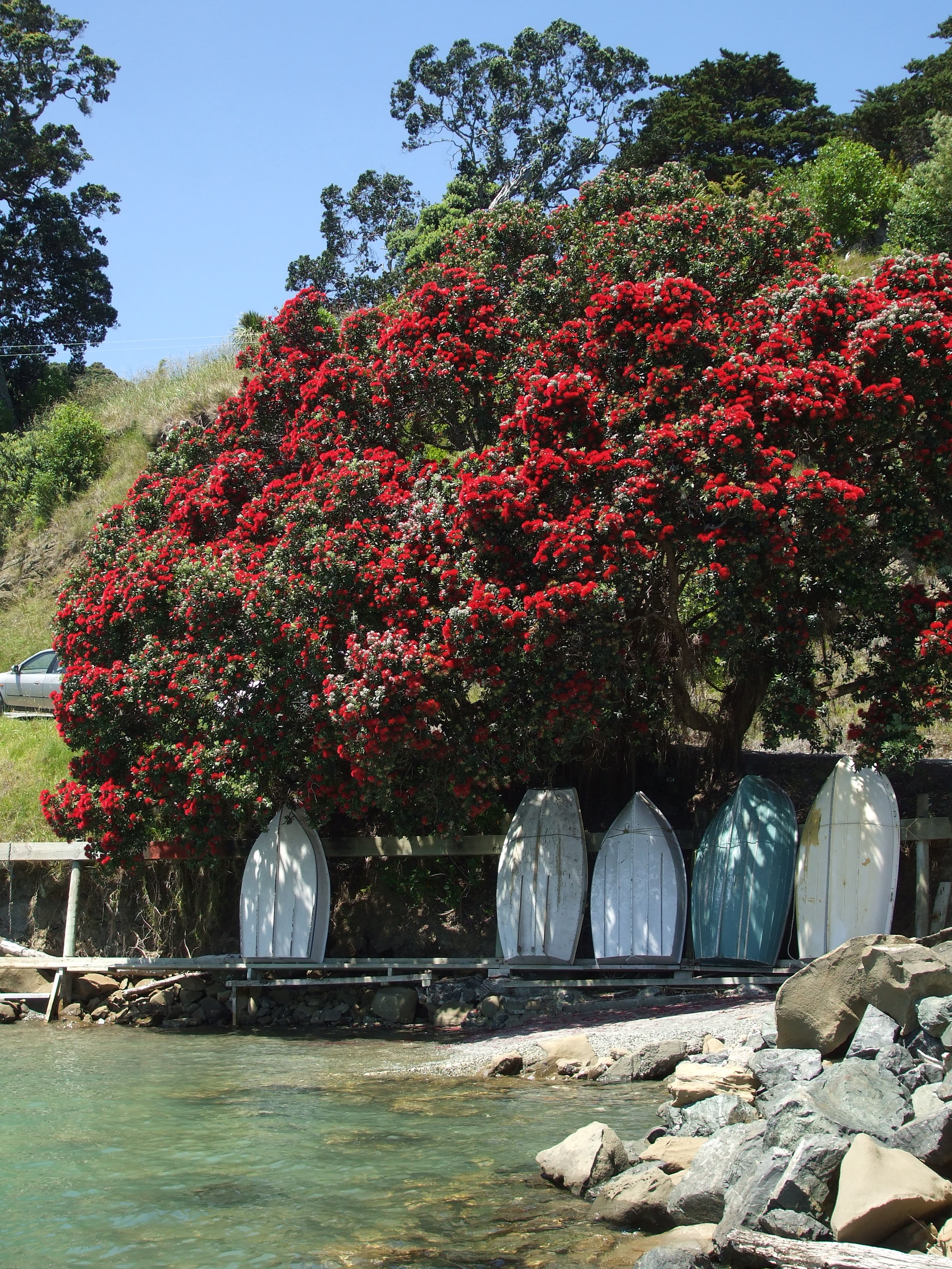 CHRISTMAS AT MAHURANGI HARBOUR