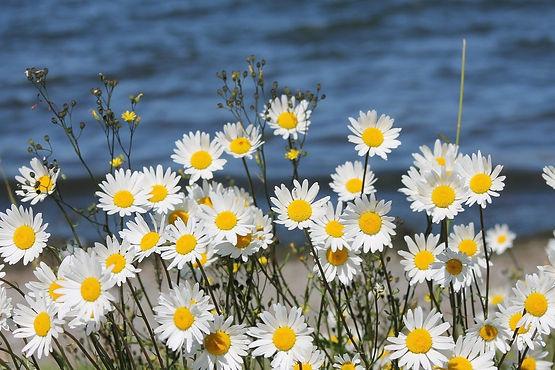 flowers-844120_1280.jpg