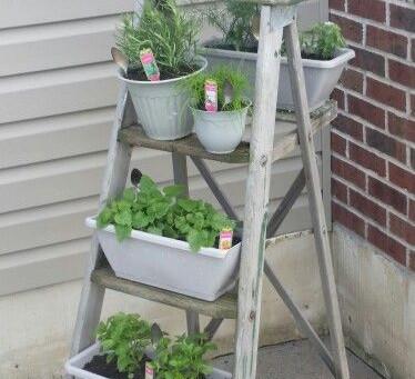 Eco Blog 9: Grow your own