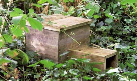 Eco Blog 3: Bird Cake and Hedgehog Houses