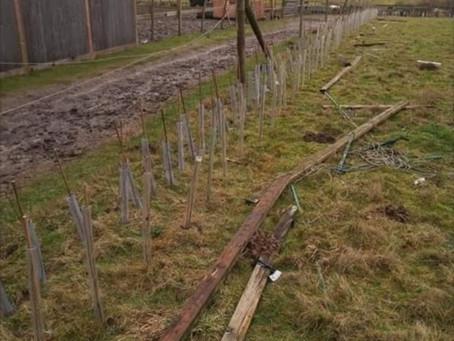 Eco Blog 4: Incredible Trees