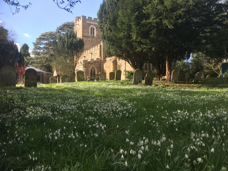 Living Churchyard: What to look out for in February