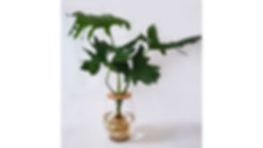 24cm vase with philodendron.jpg