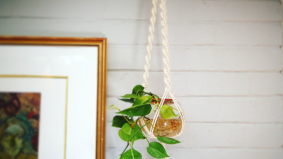 Macrame hanger with heart leaf philodendron