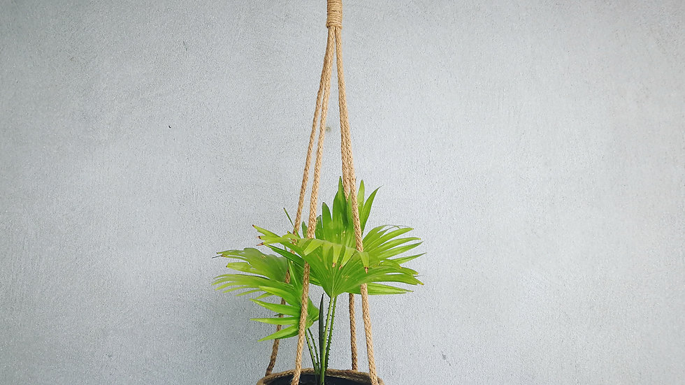 Hanging Basket with Livisona Palm