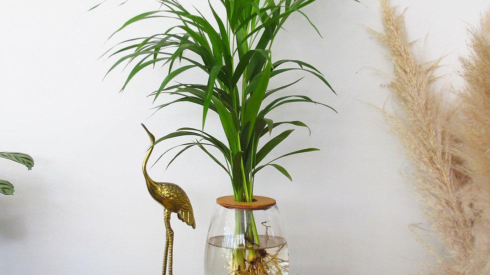 20cm Barrel Vase with Areca Bamboo
