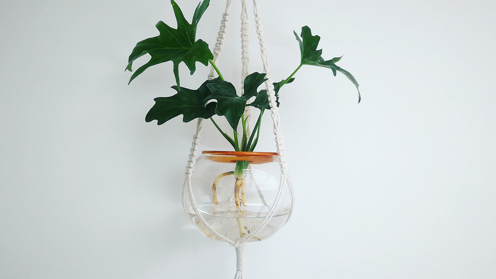 Macrame Hanger with Philodendron Selloum (15cm)