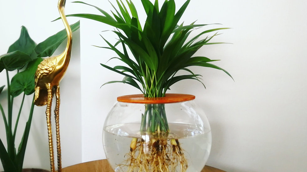 15cm Fishbowl with Areca Bamboo