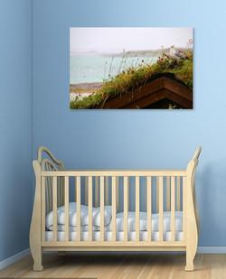 wallphoto - seagull -  baby