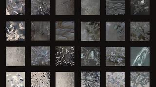 Architecture's cells