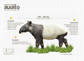 สมเสร็จ หรือผสมเสร็จ(Malayan Tapir)
