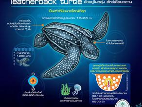 เต่ามะเฟือง(Leatherback Sea Turtle)