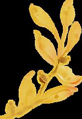 leafA yellow.png