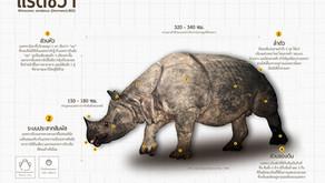 แรดชวา(Lesser One-horned Rhinoceros)