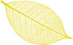 leaf yellow.png