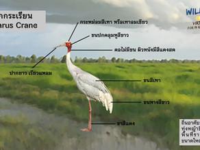 ภาพตัวอย่างนกกระเรียน