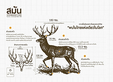 สมัน Schomburgk's deer