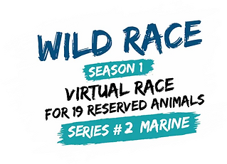 Logo Wild Race searies2.webp